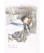 "Red Fox in Winter 8""x11.5"""