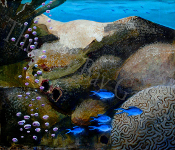"""Reef Scene"" Copyright 2011 Betsey Willis"